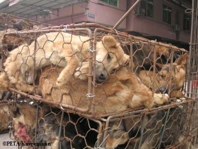حقایق صنعت خز - تولید خز سگ و گربه
