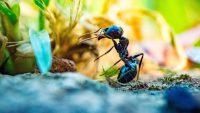 روشهای اخلاقی دور کردن حشرات از محل زندگی